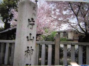 片山神社の桜