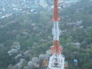 南山ソウルタワーからの桜
