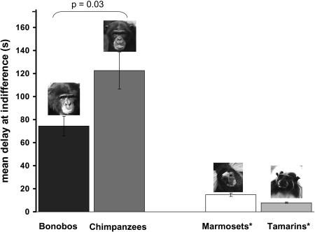 遅延報酬 チンパンジー