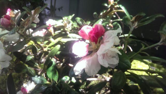あさなぎ花1