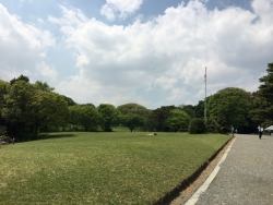 明治神宮の新緑 3n