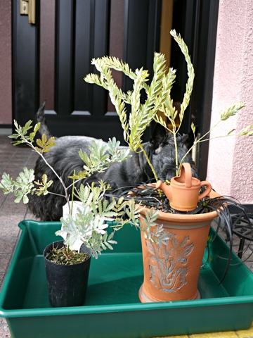 gardening285