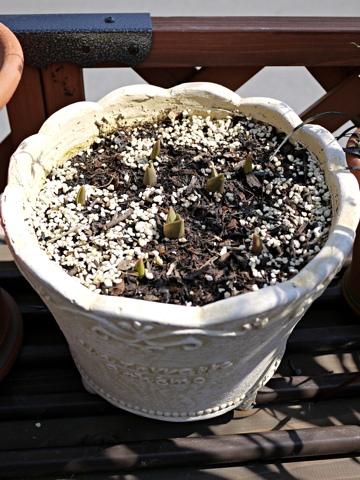 gardening291