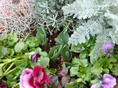 gardening296