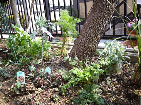 gardening298