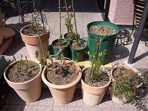 gardening302