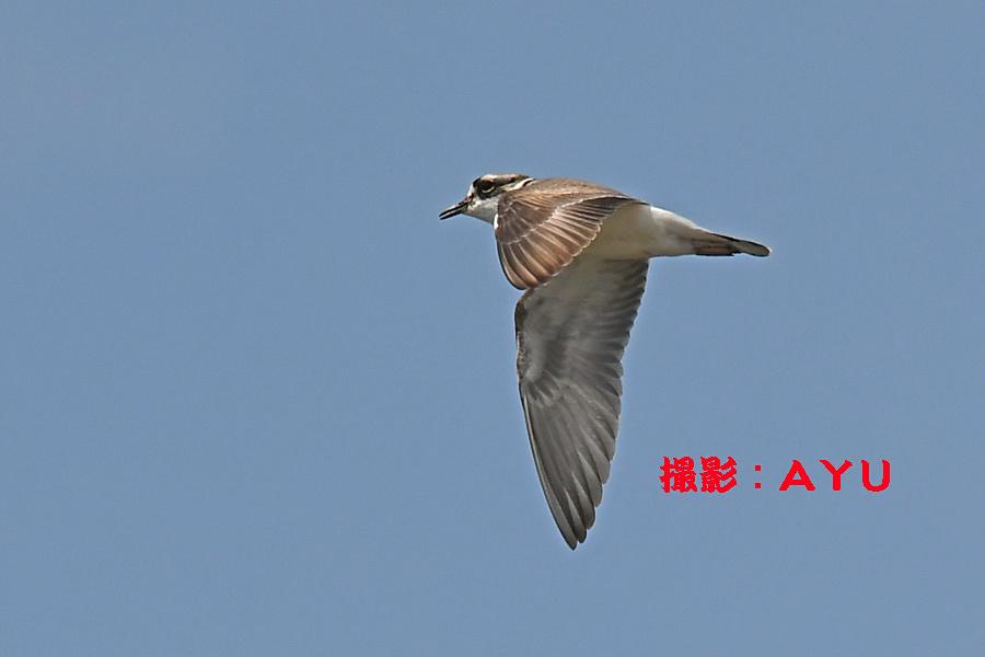 20170415132349cac.jpg