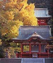 鶴岡八幡宮黄葉