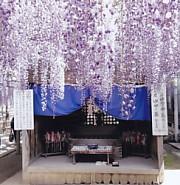熊野の長藤ゆやと母の墓