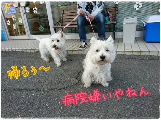 azukiai_20170426223027533.jpg