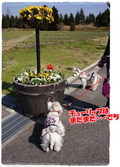 bihoku13_201704292256405c5.jpg