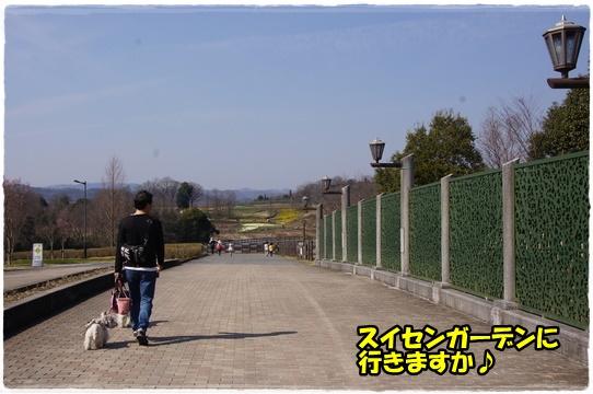 bihoku14_2017042922563926a.jpg