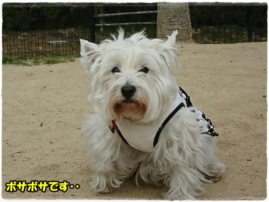 fukuyama6.jpg