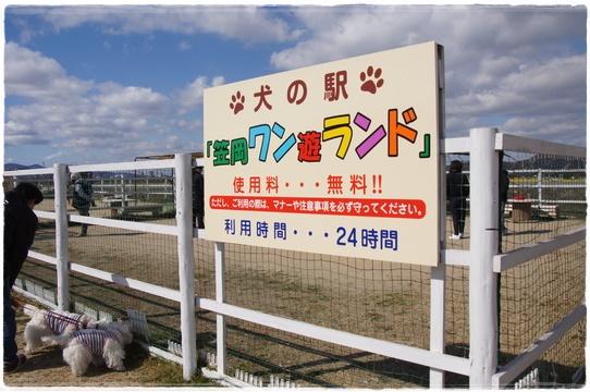 kasaoka11_20170302224617287.jpg