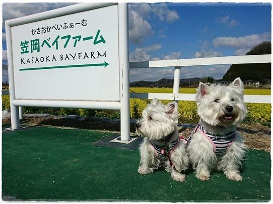 kasaoka3_2017030219571485d.jpg