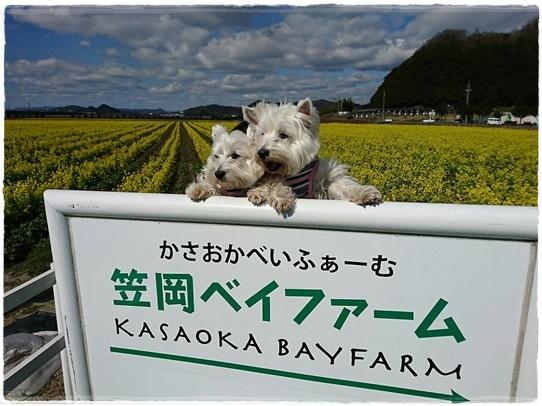 kasaoka4_20170302195713aec.jpg