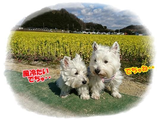 kasaoka7_20170302222353458.jpg