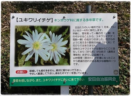 yukiwariichige2.jpg