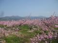 奥秩父の山々と桃の花