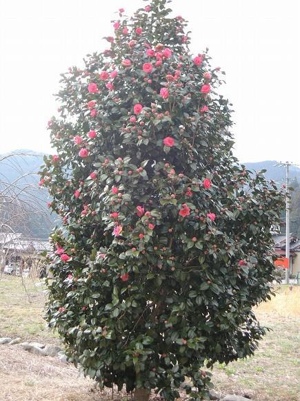 DSCN6007.jpg