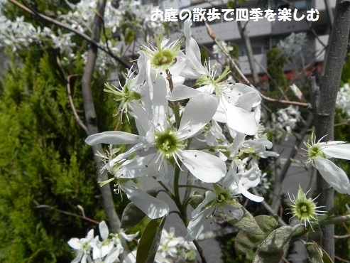jyu-nberi-45.jpg