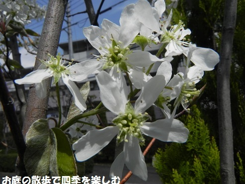 jyu-nberi-46.jpg