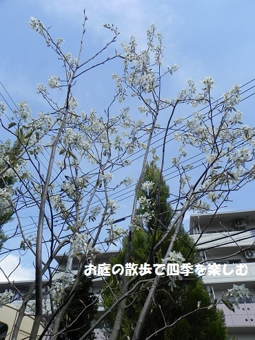 jyu-nberi-47.jpg