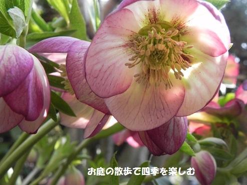 kurisumasuro-zu90.jpg