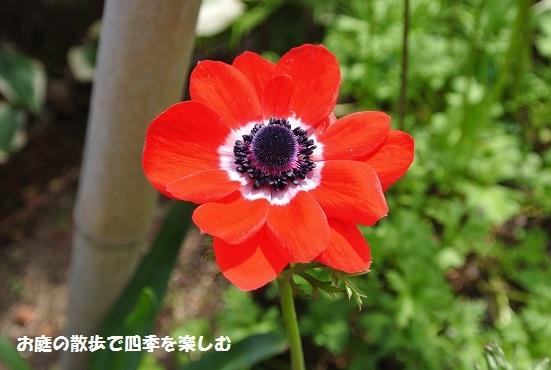 niwa236.jpg