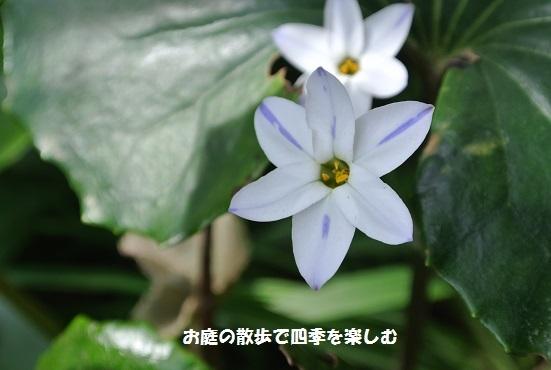 niwa237.jpg