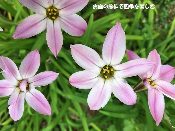 niwa241.jpg