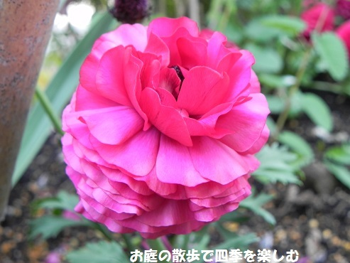 ranankyurasu22_2017043011395856b.jpg