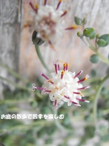 taniku186_20170323162441cbf.jpg