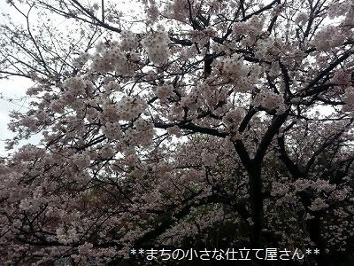 20170407_070008.jpg