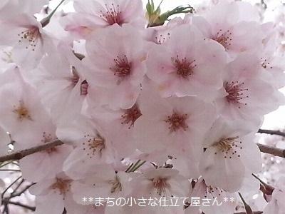 20170409_105654.jpg