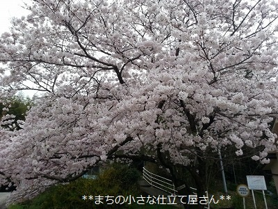 20170410_070847.jpg