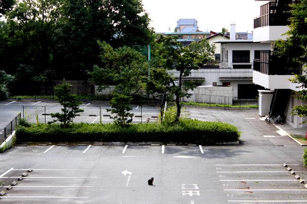2013-1027-0172.jpg