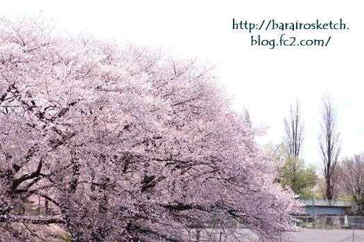 桜201704-22