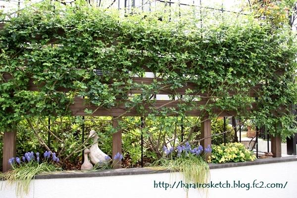 4月の庭12