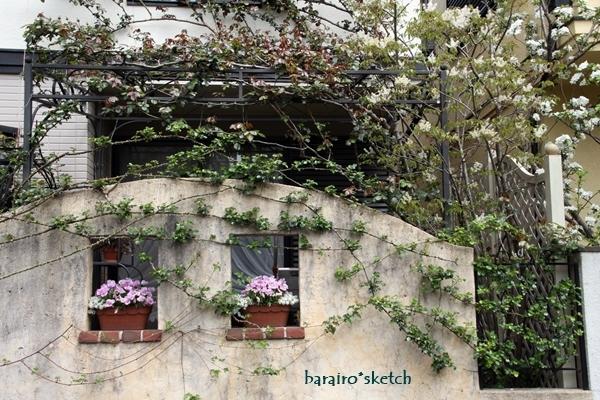 4月の庭18