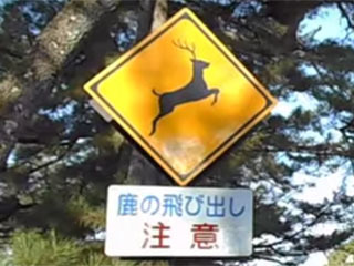 鹿飛び出し注意