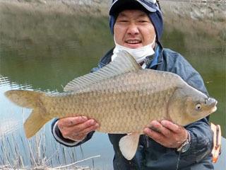 神流湖で釣り上げられた60cmのヘラブナ
