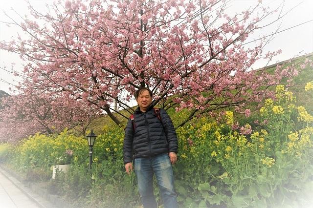 2017河津 河津桜と菜の花(1)