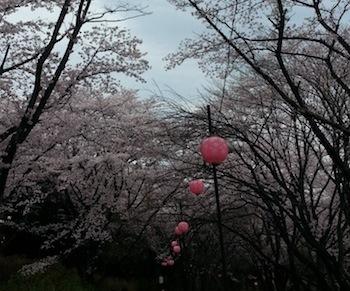 桜の縁飾り