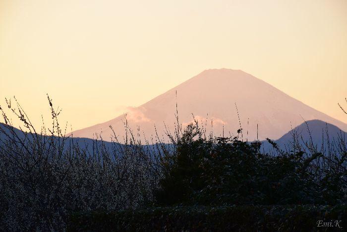 101-Emi-白梅の向こうに富士山