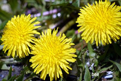 bee-170414h1.jpg