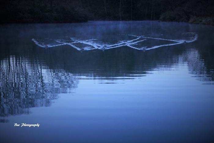 bee-長池公園6780