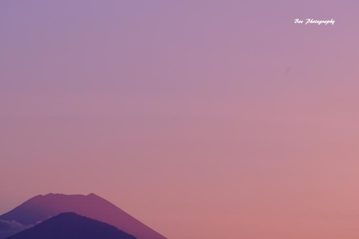 bee-富士山8391