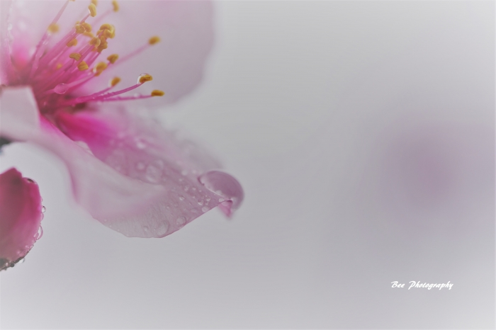 bee-アンジェ-アーモンド0112