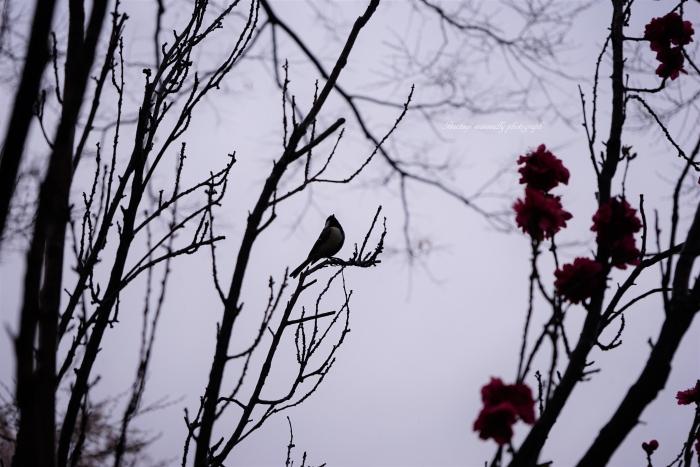 bee- 綾南公園DSC01094